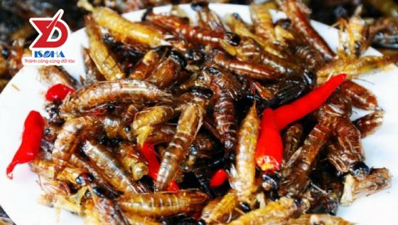 Cảnh báo ngộ độc do thói quen ăn côn trùng